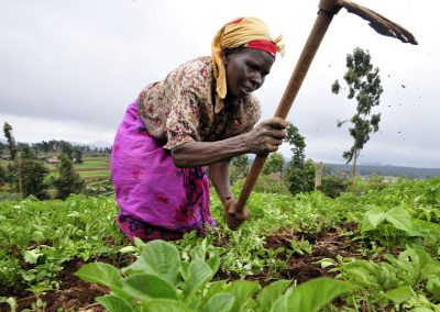 Sustainable agricultural development in central Africa